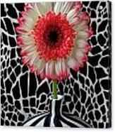 Daisy And Graphic Vase Acrylic Print
