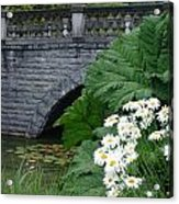 Stone Bridge Daisies Acrylic Print