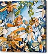Daisy Carnival Acrylic Print