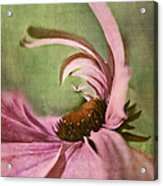 Daisy Fun - A01v04b2t05 Acrylic Print by Variance Collections