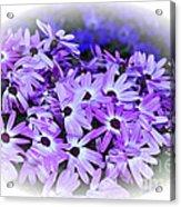 Daisy Garden Vignette Acrylic Print