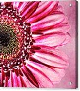 Daisy IIi Acrylic Print