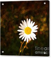 Daisy Is Single But Not Lonely  Acrylic Print