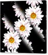 Daisy Split Acrylic Print