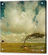 Daisy Spots A Tree Acrylic Print