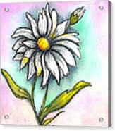 Daisy Thoughts Acrylic Print