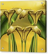 Dance Of The Yellow Calla Lilies Acrylic Print