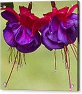 Dancing In The Breeze Acrylic Print by Elvira Butler