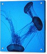 Dancing Jellyfish Acrylic Print