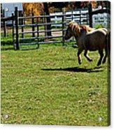Dancing Pony Acrylic Print
