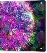 Dandelion Party Acrylic Print by Judi Bagwell
