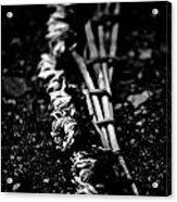 Dandelion Wreath Acrylic Print