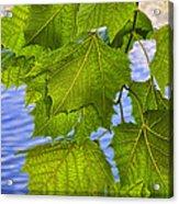 Dangling Leaves Acrylic Print by Deborah Benoit