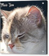 Daphne Cat Miss You Acrylic Print