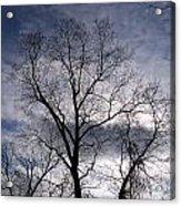 Dark And Stromy Night Trees Acrylic Print