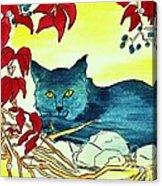 Dark Cat Acrylic Print