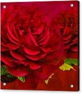 Dark Pink Rose Acrylic Print