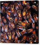 Dark Swarm Attack Acrylic Print