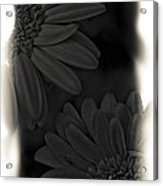 Darkness To Live Acrylic Print