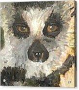 Darth Lemur Acrylic Print