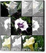 Datura - Ballerina Series Acrylic Print