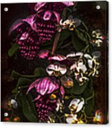 Davinci Orchid Wall Acrylic Print