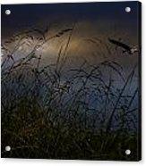 Dawn Light Acrylic Print