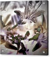 Day Lilies - Abstract Acrylic Print