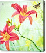 Day Lily Delight Acrylic Print by Bonnie Barry