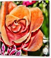 Dazzling Rose Acrylic Print
