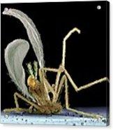 Dead Fly From Car Headlamp, Sem Acrylic Print