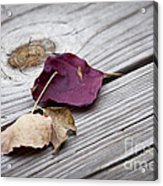 Dead Leaves Acrylic Print