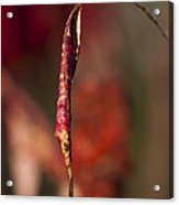 Dead Red Leaf Acrylic Print