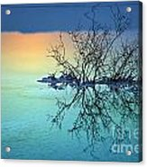 Dead Sea - Withered Bush At Dawn Acrylic Print
