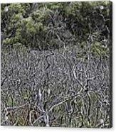 Dead Tree Garden Acrylic Print