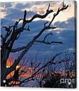 Dead Trees At Sunrise Acrylic Print
