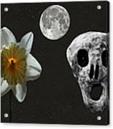 Death And The Daffodil  Acrylic Print