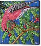 December Berries Acrylic Print