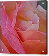 December Rose Acrylic Print