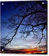 December White Oak Sunrise Acrylic Print