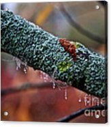 Decorated Branch Acrylic Print