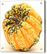 Decorative Squash Acrylic Print