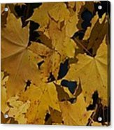 Deep Leaves Acrylic Print