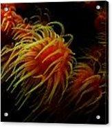 Deep Ocean Coral Polyp Acrylic Print