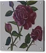 Deep Red Roses Acrylic Print