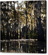 Deep Swamp Acrylic Print