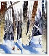 Deep Woods 1 Acrylic Print