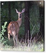 Deer - Doe - Nearing The Edge Acrylic Print