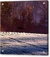Deer In The Distance Acrylic Print
