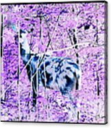 Deer In The Woods Inverted Negative Image Acrylic Print